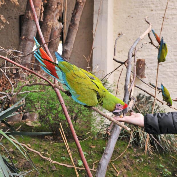 Safari Perroquets